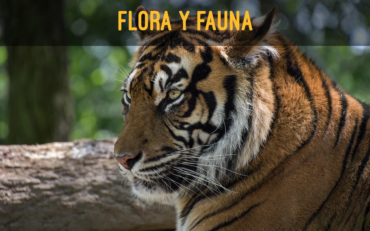 flora y fauna indonesia